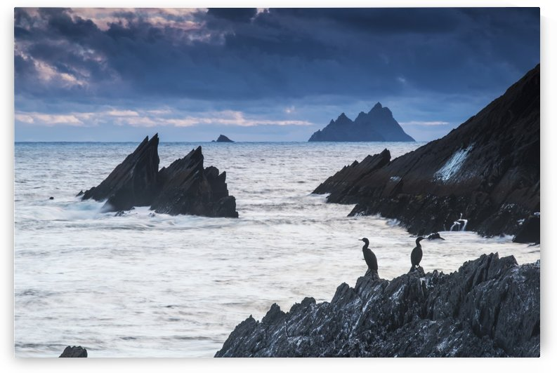 Cormorants on the rocks;Iveragh peninsula, county kerry, ireland by PacificStock