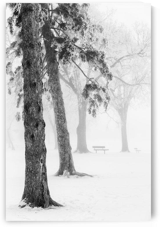 Ice fog in winter assiniboine park;Winnipeg manitoba canada by PacificStock