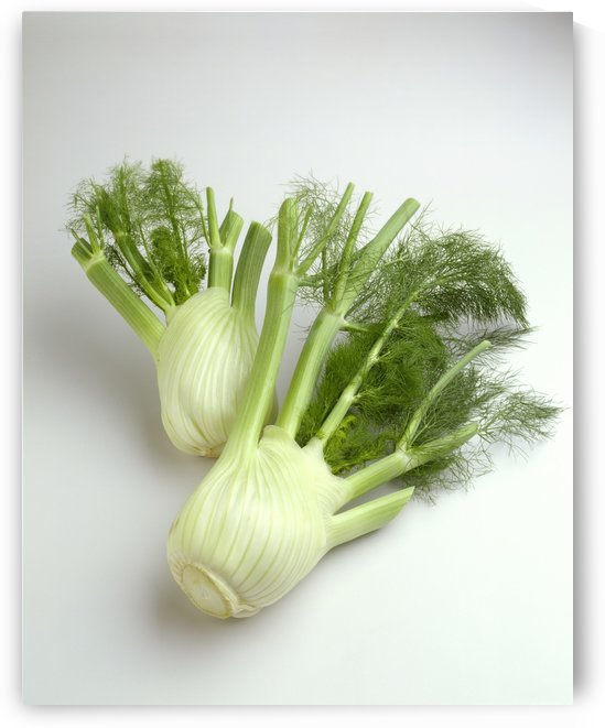Agriculture - Fennel, on white. by PacificStock