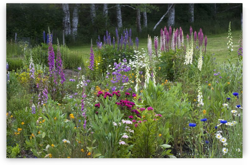 A mixture of flowers bloom in hillside flowerbeds; Astoria, Oregon, United States of America by PacificStock