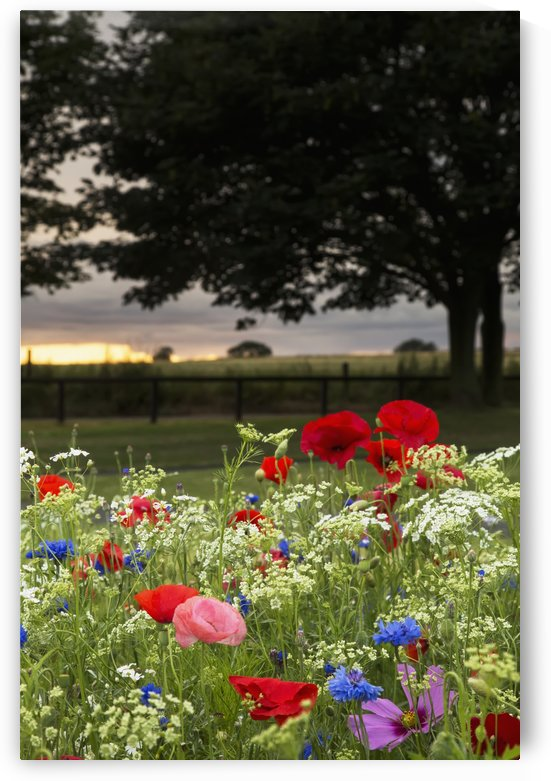 Colourful flowers blossoming in a garden with a sunset sky in the distance; South Shields, Tyne and Wear, England by PacificStock