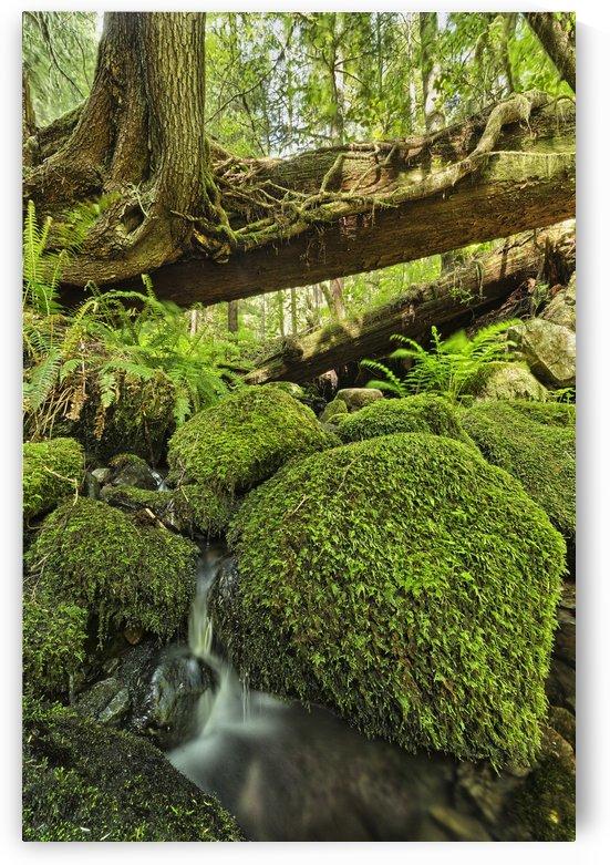 Rainforest in Avatar Grove near Tofino; British Columbia, Canada by PacificStock
