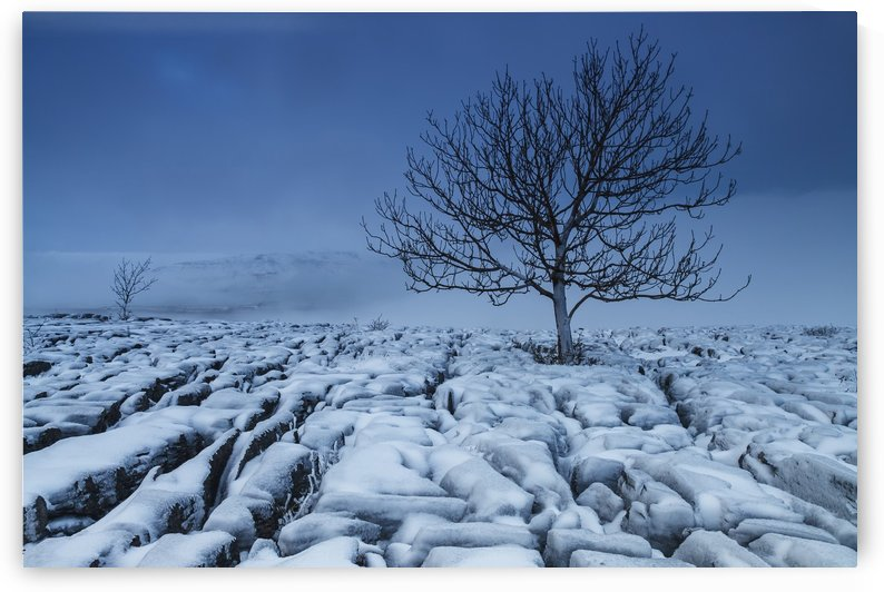 Cold Blue Trees, Yorkshire Dales, UK by Steve Thompson Sunstormphotography