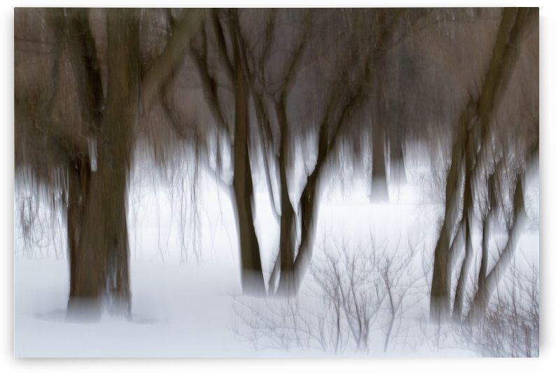 Motion blur of trees; Quebec, Canada by PacificStock