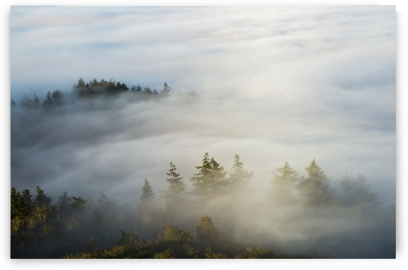 Morning sun lights up the fog; Astoria, Oregon, United States of America by PacificStock