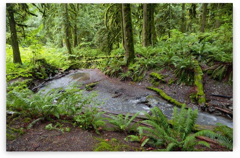Bridal Falls; British Columbia, Canada by PacificStock