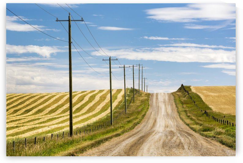Gravel road climbing a hill with wooden electrical poles and a brown cut field on one side and a golden grain field on the other with blue sky and clouds; Alberta, Canada by PacificStock