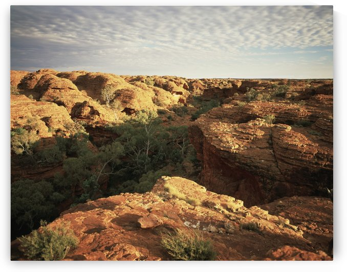 Kings Canyon, Central Australia; Northern Territory, Australia by PacificStock