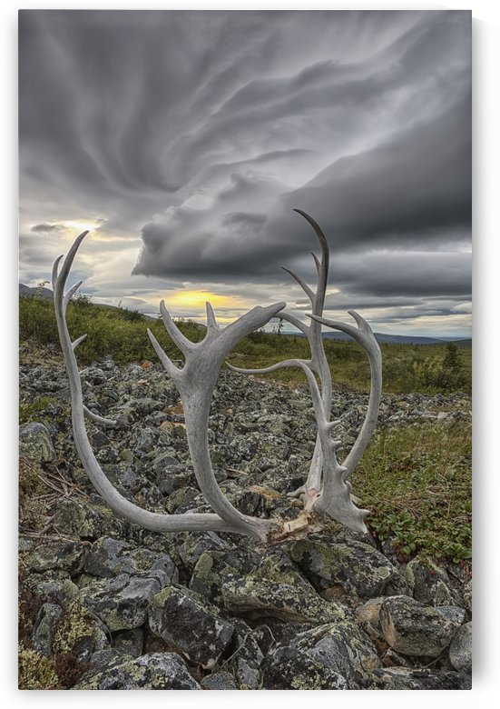 Lenticular clouds form overtop of Crow Mountain while a set of caribou antlers lie on the rocks; Old Crow, Yukon, Canada by PacificStock