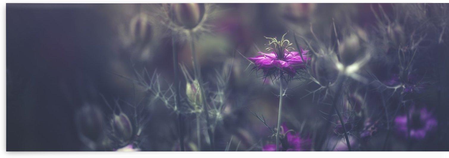 Purple blossoms; Prague, Czech Republic by PacificStock