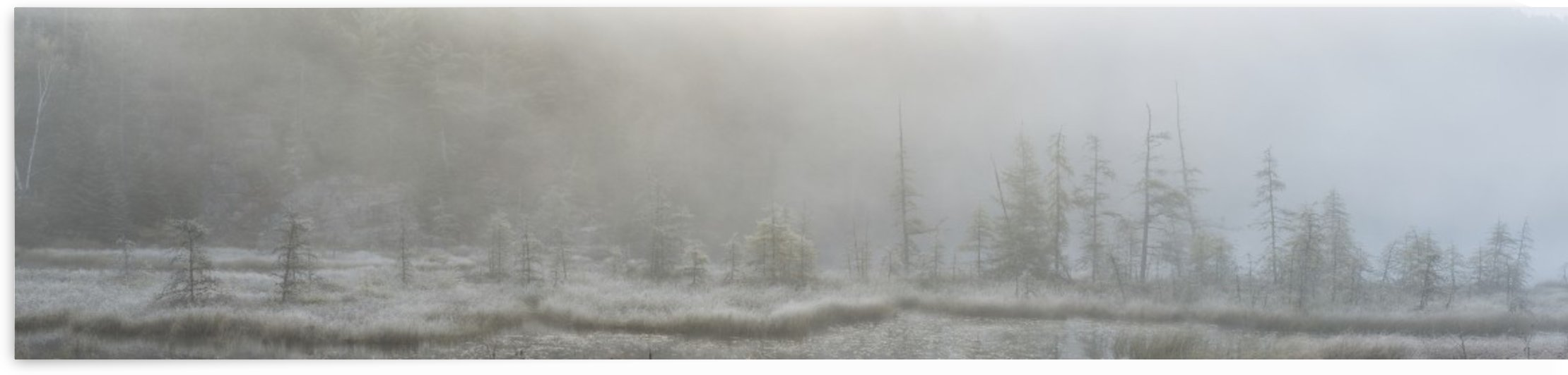 Panoramic view of early morning mist over a small pond along the Rock Lake Road, Algonquin Park; Ontario, Canada by PacificStock