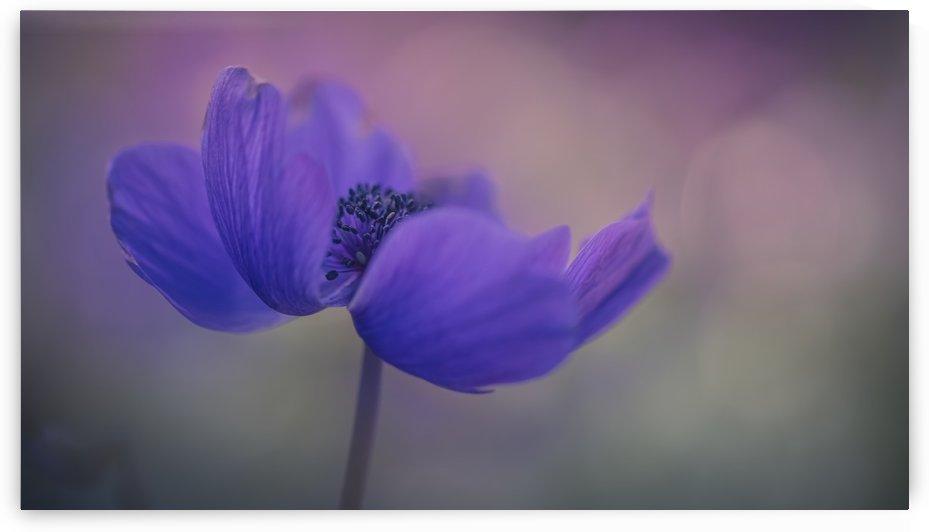 Delicate purple flower in bloom; Jerusalem, Israel by PacificStock