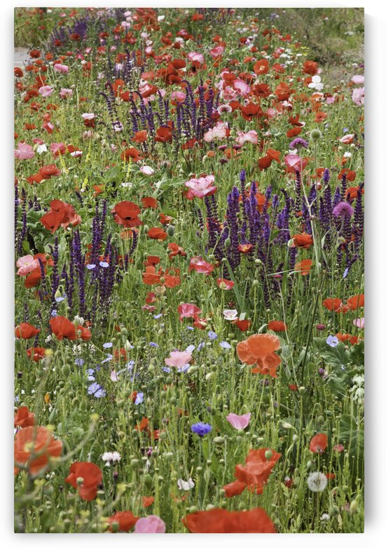 Colourful wildflowers in a field; Melk, Austria by PacificStock