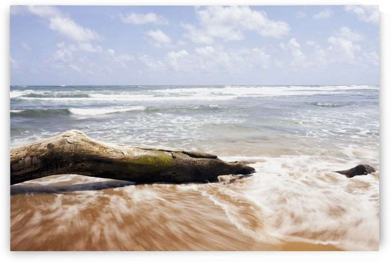 Driftwood and rocks at Lydgate Beach Park; Lydgate, Kauai, Hawaii, United States of America by PacificStock
