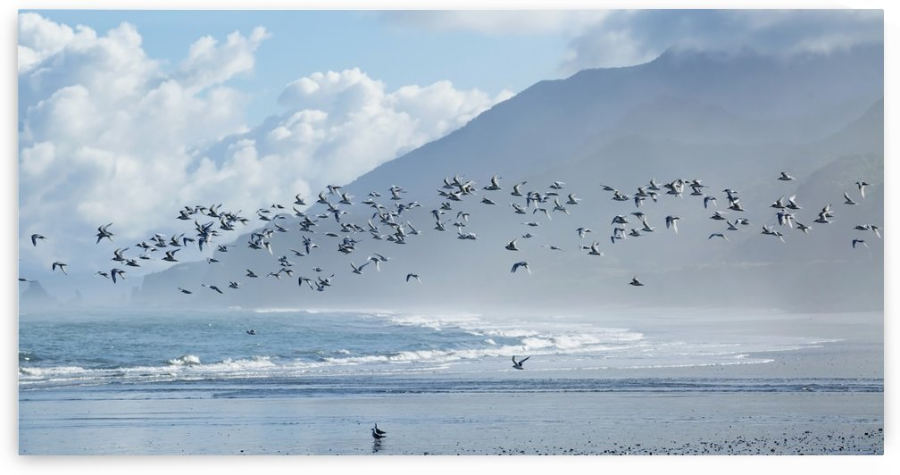 Flock of White-Fronted Terns (Sterna striata) in flight at Rapahoe Beach, on the West Coast of the South Island; New Zealand by PacificStock
