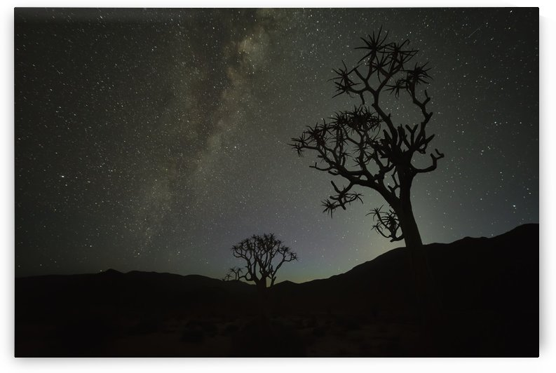 Kookerboom tree under the Milky Way, Richtersveld National Park; South Africa by PacificStock