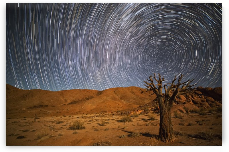 Richtersveld National Park with dead Kookerboom tree and star trails in the night sky; South Africa by PacificStock