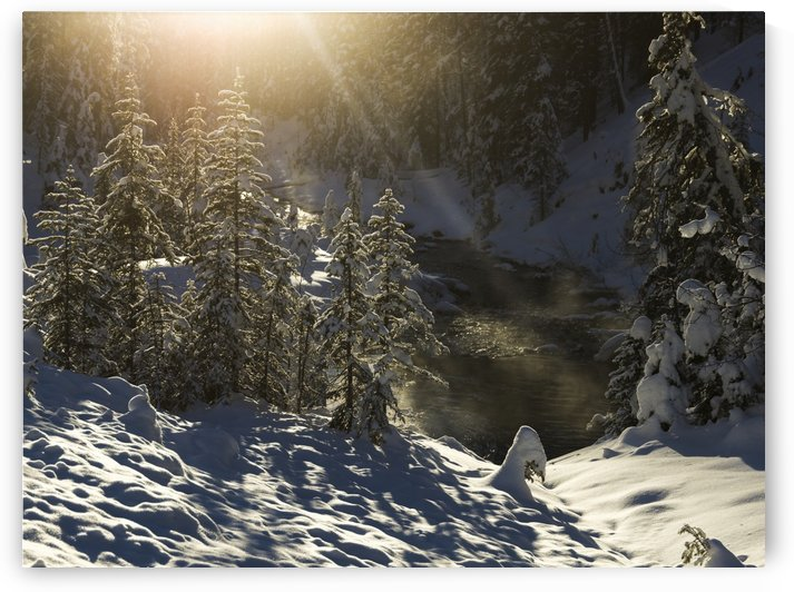 Snow covered trees, Yoho National Park; British Columbia, Canada by PacificStock