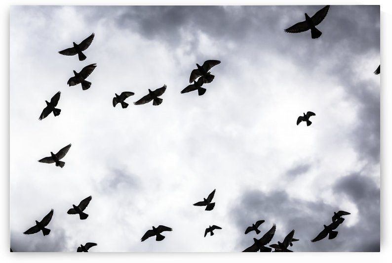 Low angle view of silhouetted flock of birds flying against a cloudy sky; Thessaloniki, Greece by PacificStock