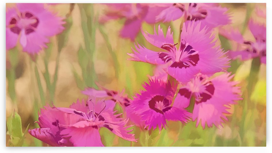 Painting of pink flowers in a garden; Alberta, Canada by PacificStock