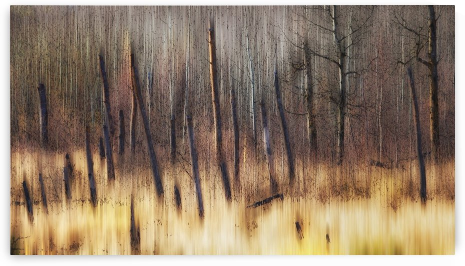 Painting of leafless trees in a forest; Alberta, Canada by PacificStock