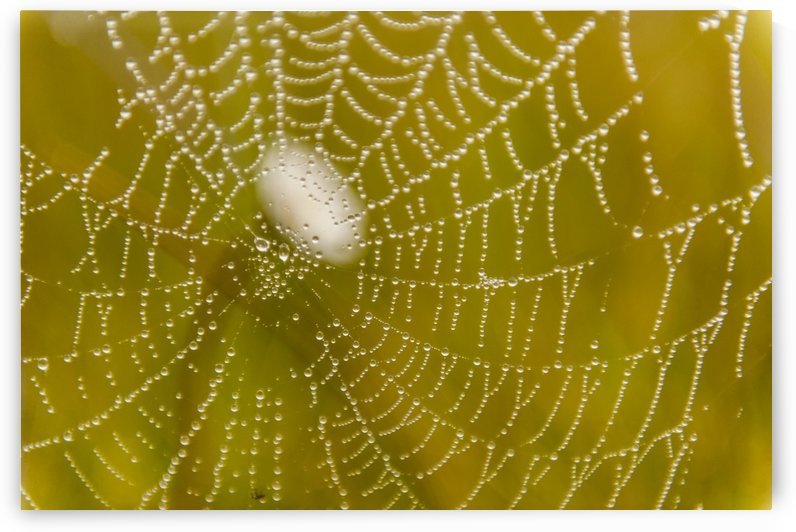 Morning dew on a spider web near Silver Salmon Creek in Lake Clark National Park & Preserve, Alaska. by PacificStock
