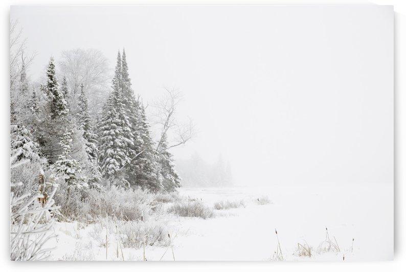 Snowy winter scene in the Algonquin Provincial Park; Ontario, Canada by PacificStock
