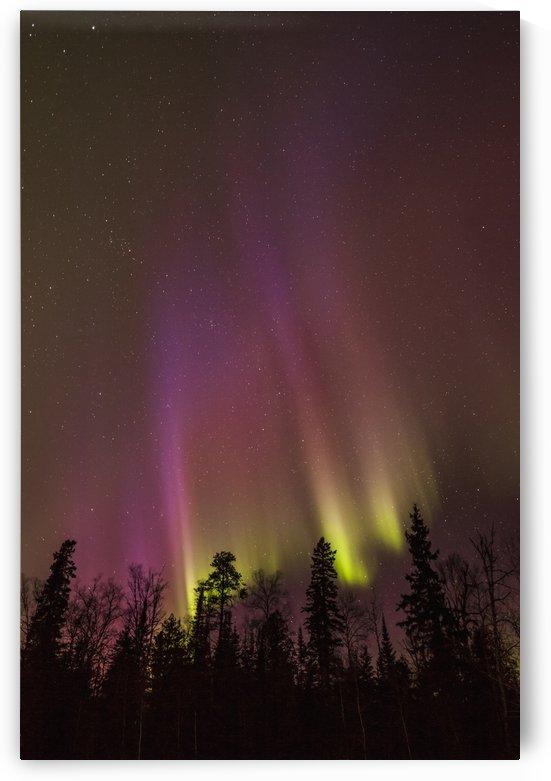 Aurora borealis over trees; Thunder Bay, Ontario, Canada by PacificStock