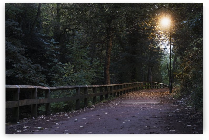 Walking path illuminated by a lamp post at dusk; Newcastle, Tyne and Wear, England by PacificStock