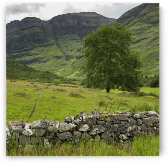 Lush grass in the hills and a stone wall in the foreground; Scotland by PacificStock