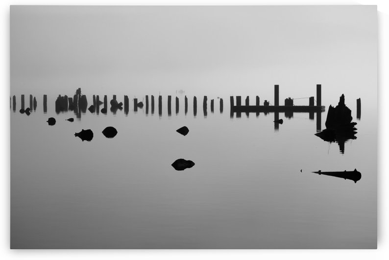 Log pilings silhouetted against foggy lake; Bellingham, Washington, United States of America by PacificStock