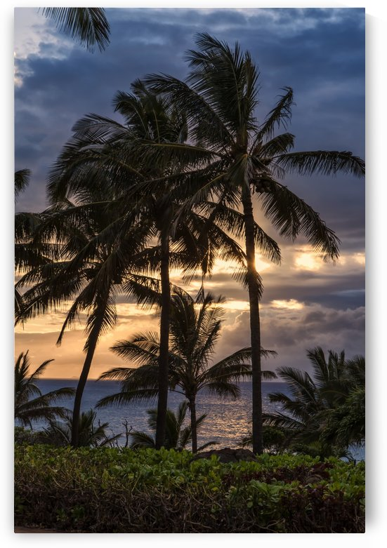 Silhouetted palm trees along the shoreline with the sun setting; Molokai, Hawaii, United States of America by PacificStock