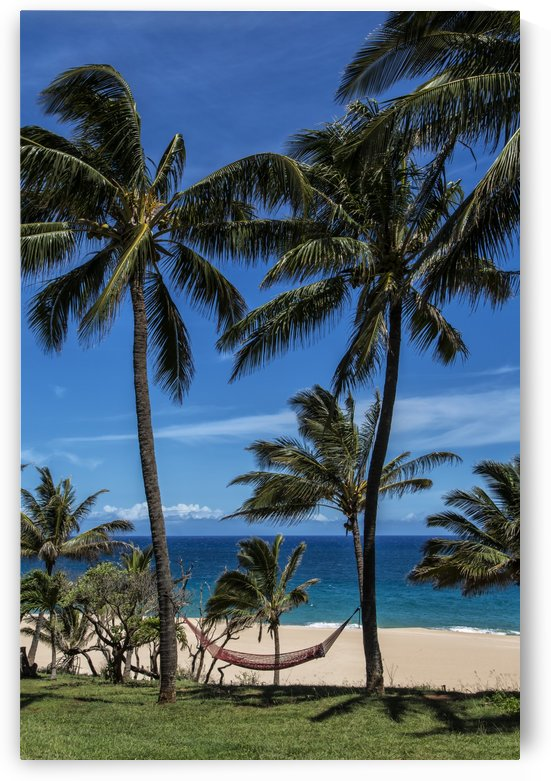 A hammock hangs between two palm trees on the beach with blue sky and ocean; Maui, Hawaii, United States of America by PacificStock
