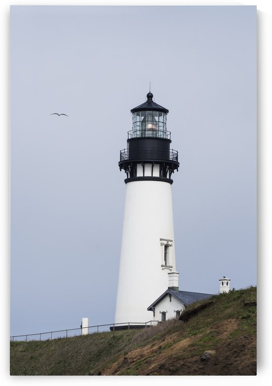 A gull flies past the lighthouse at Yaquina Head; Newport, Oregon, United States of America by PacificStock