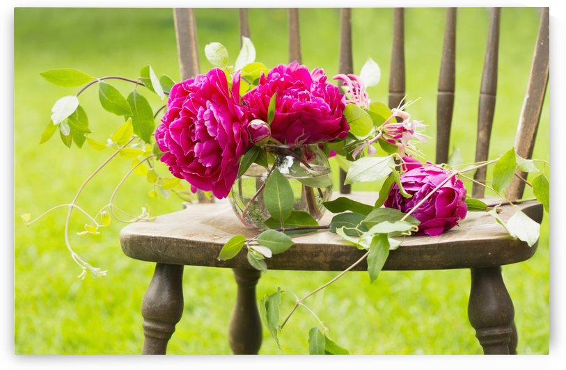 Fresh pink peonies picked and lying on a wooden chair; New Westminster, British Columbia, Canada by PacificStock