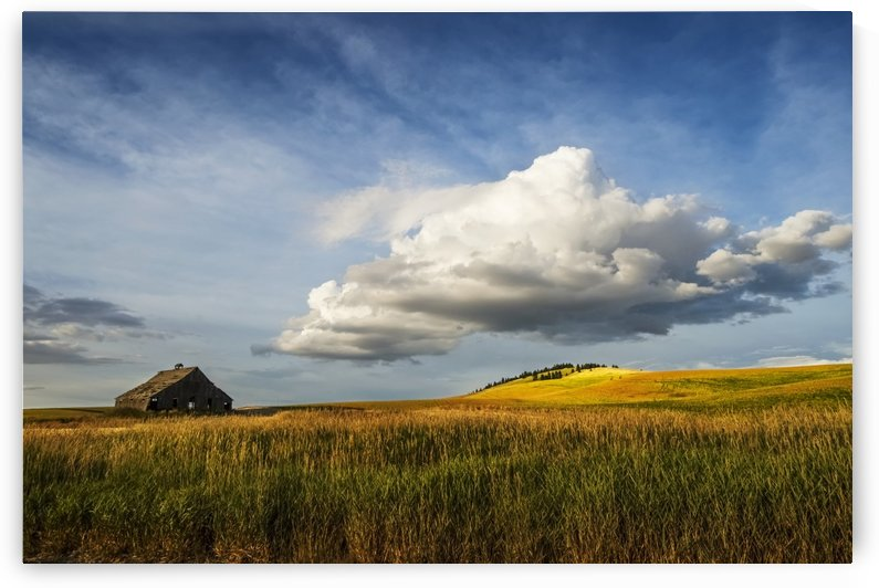 Wheat field and old wooden barn; Palouse, Washington, United States of America by PacificStock