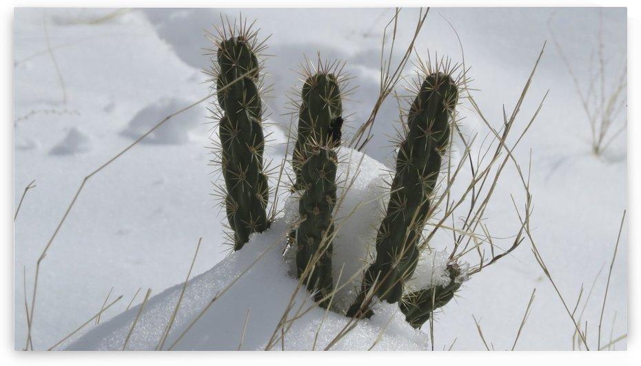 Cactus in the Snow 2VP by Vicki Polin