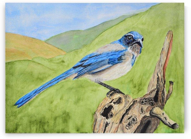 Blue Scrub Jay On Dead Tree by Linda Brody