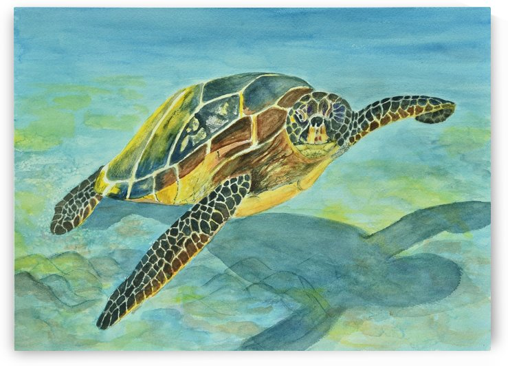 Sea Turtle by Linda Brody