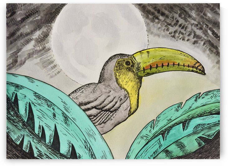 Toucan by Linda Brody