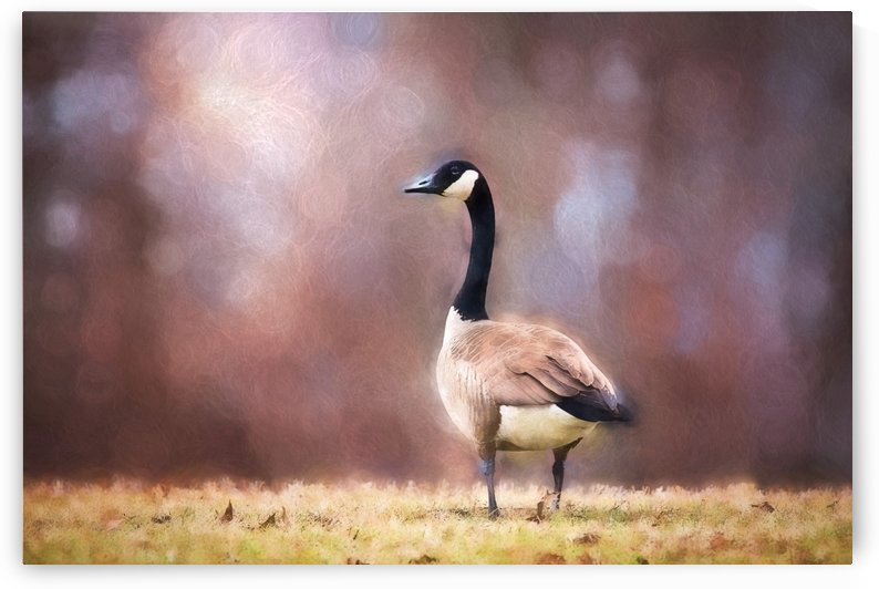Autumn Canada Goose by Sharon McConnell