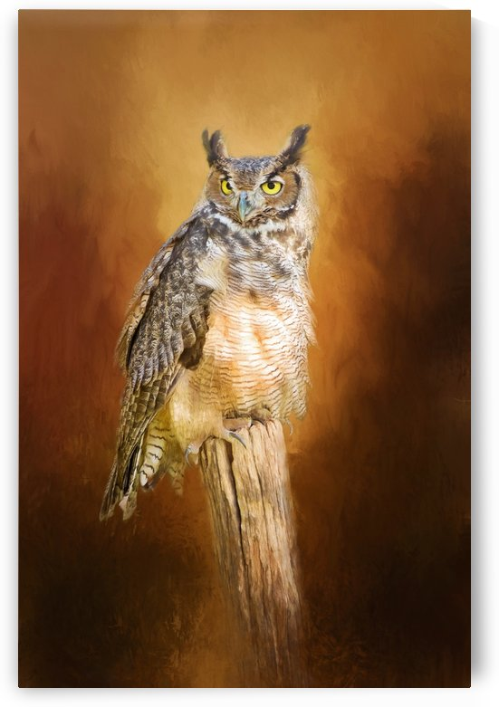 Great Horned Owl In Autumn by Sharon McConnell