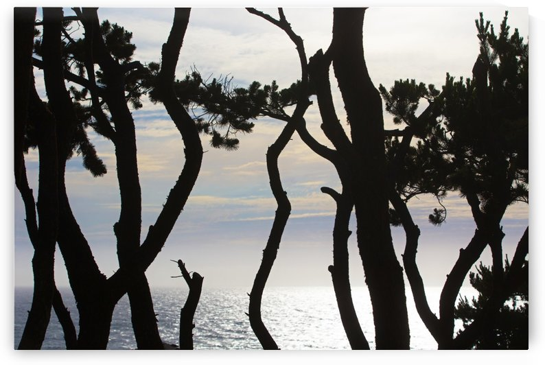 Sea Beyond The Spruces by John Foster