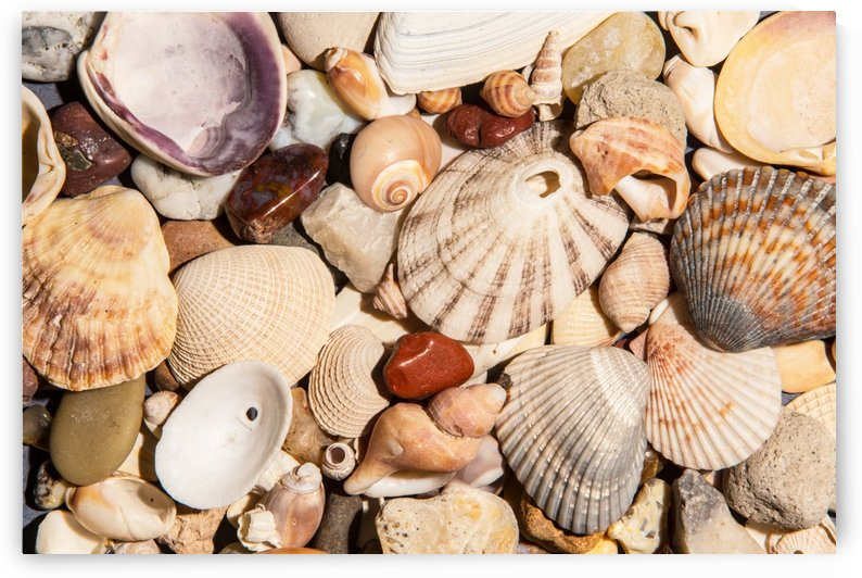 Seashells and Agates by John Foster