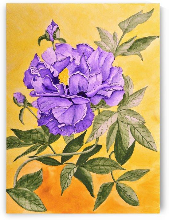 Purple Peony by Linda Brody