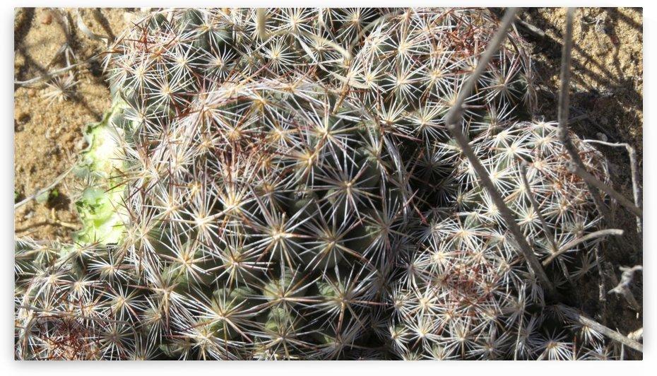 Bite in Cactus - Along the Rio Grande VP6 by Vicki Polin