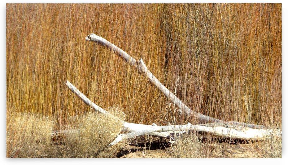 Along the Rio Grande VP5 by Vicki Polin