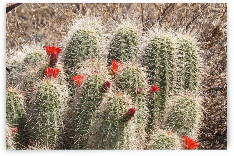 Cactus Flower VP1 by Vicki Polin