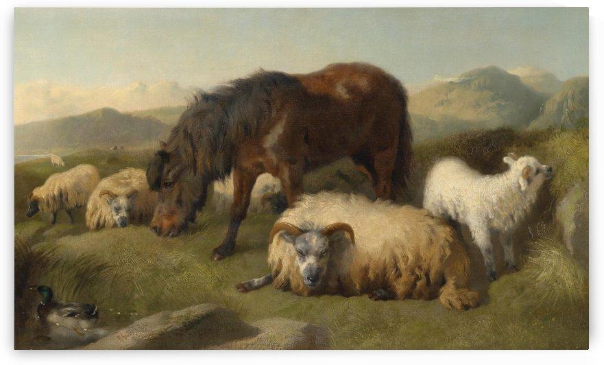Ziegen Schafe und Pony by Richard Ansdell