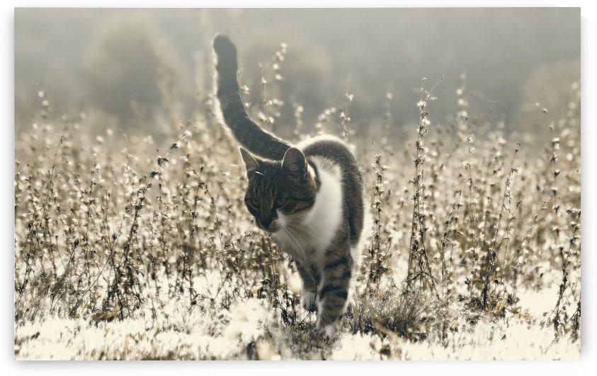 Morning hunt by Marko Radovanovic